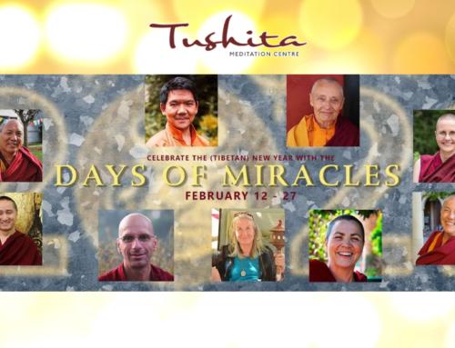Celebriamo il nuovo anno del Bue di Metallo con i 15 giorni dei miracoli!